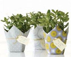 10 идей подарочной упаковки горшков