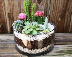 Мини-сад из кактусов своими руками