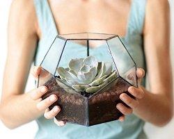 Прозрачные горшки для цветов by Waen
