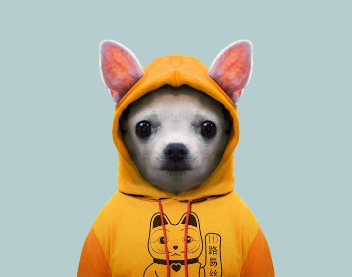 Картинки животные в одежде