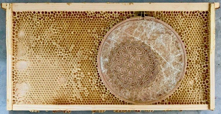 Вышивка, бисер и… пчелы!